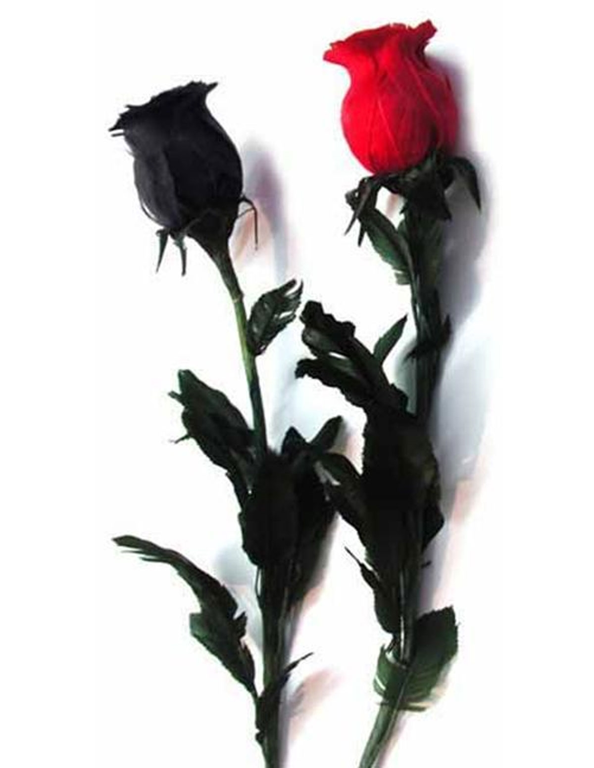 Black Feather Rose